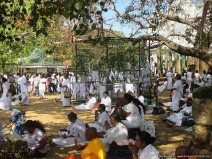 K Anuradhapura (237)