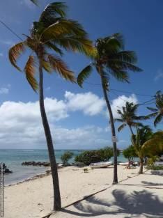 5 Guadeloupe Grande Terre (50)