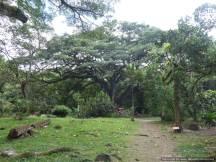 7 Martinique (109)
