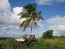 7 Martinique (26)